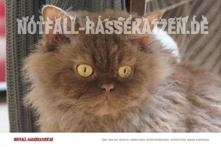 www.notfall-rassekatzen.de / Webdesign